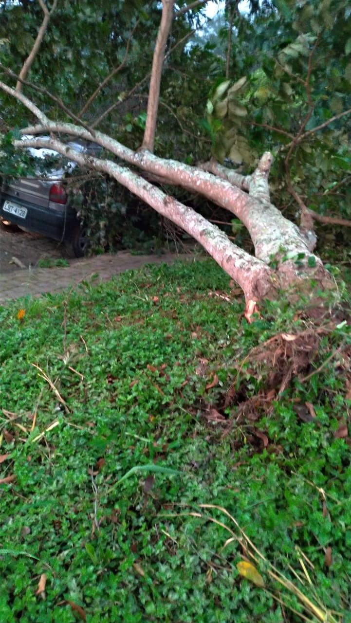 A árvore que atingiu um carro na Rua Jardel Hottz (Fotos de leitores)