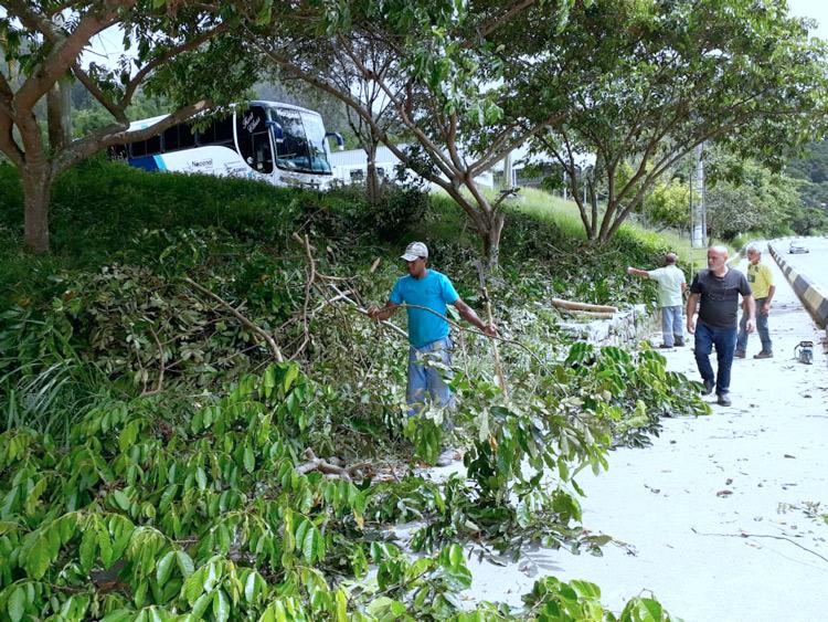 poda de árvores na via expressa_Olaria (Fotos: Secom/PMNF)