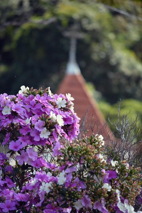 Manacás-da-serra em flor pela cidade (Fotos: Henrique Pinheiro)