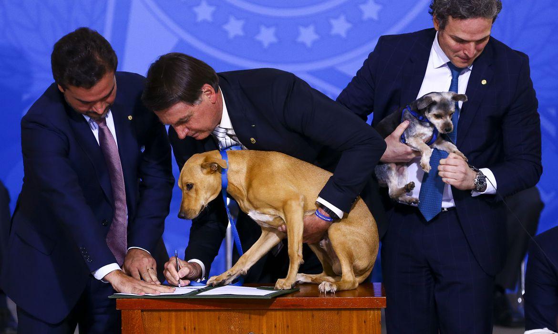 Bolsonaro assina a medida com um cão no colo (Foto: Agência Brasil/ Marcelo Camargo)