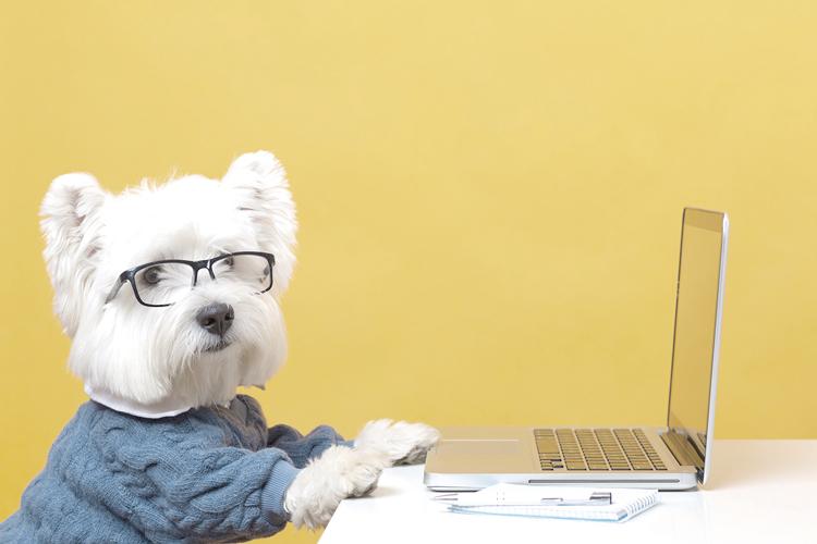 Conheça as 8 redes sociais para animais mais populares do mundo