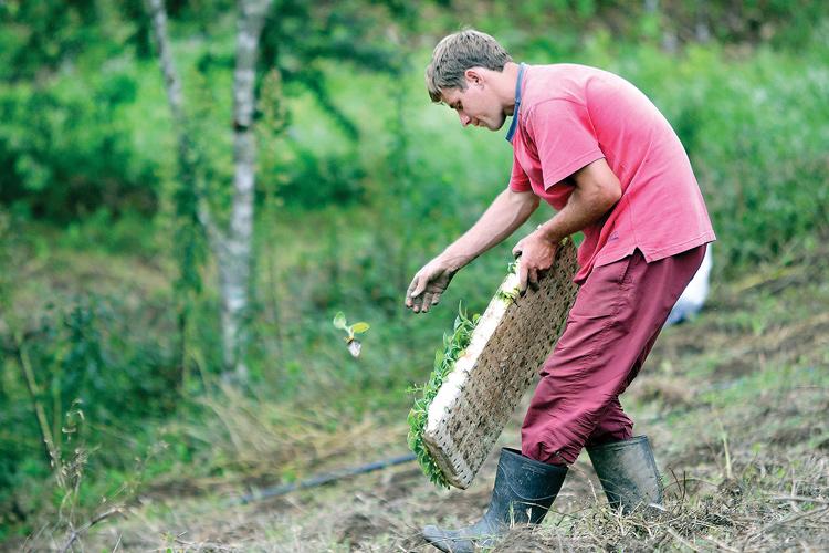 A força da agricultura familiar na região mais fértil do estado