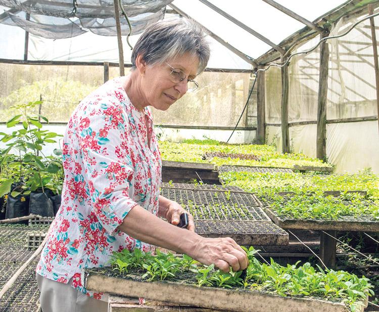 Jovelina Fonseca, do Sítio Cultivar, cuidando da sua produção de orgânicos (Fotos: Henrique Pinheiro)
