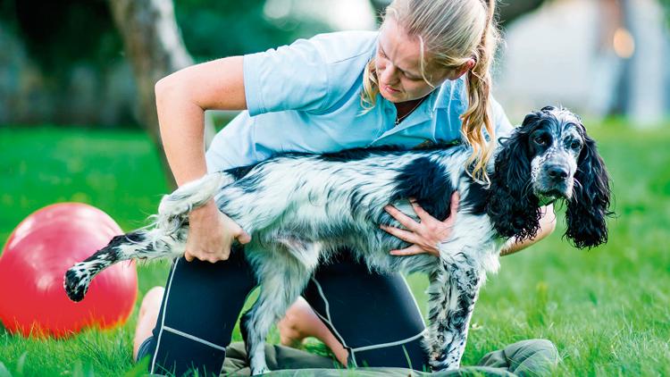 Aumenta procura por tratamentos alternativos para pets
