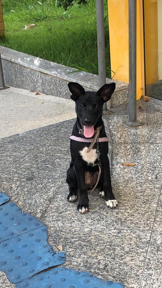A cadelinha na Deam de Nova Friburgo (Foto: Deam-NF)