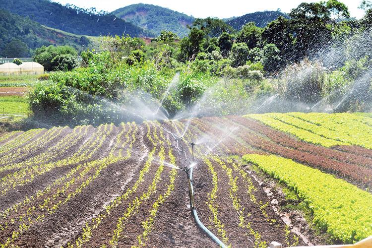 Produção agrícola em Salinas (Arquivo AVS)