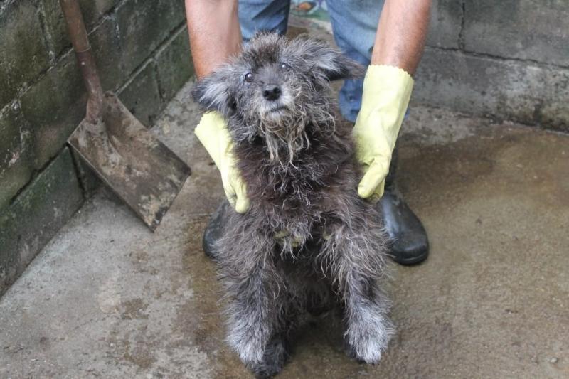 Resgate de cães em abrigo: causa que Emilene abraçou (Arquivo AVS)