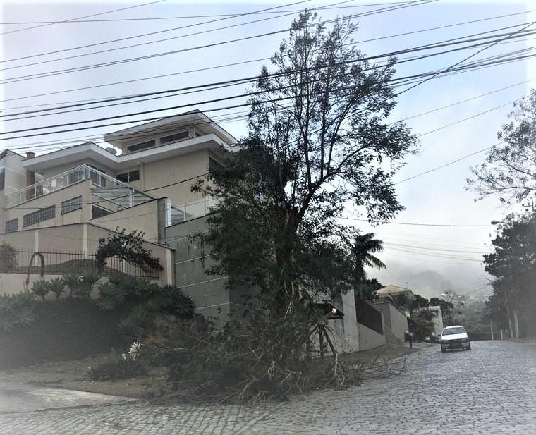 Árvore caída no Cascatinha (Foto: AVS)