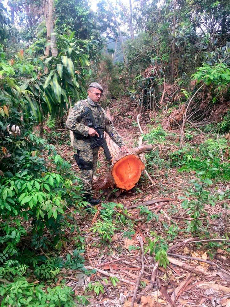 As árvores cortadas (Foto: 5ª Upam)