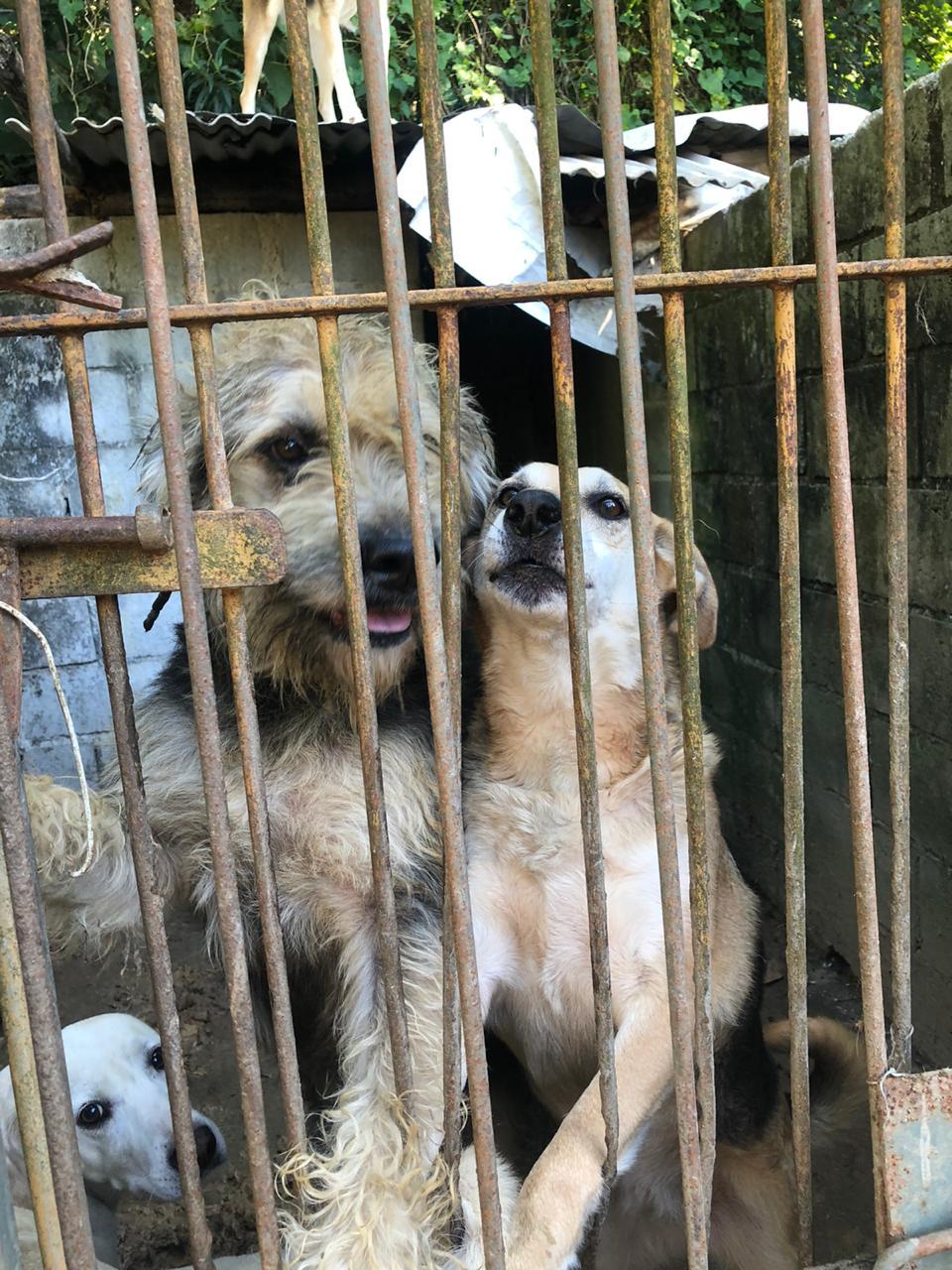 Cães no abrigo de Valéria Lima (Fotos de divulgação de voluntários de ONGs)