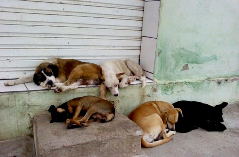 Cães de rua dormindo em calçada em Nova Friburgo (Arquivo AVS)