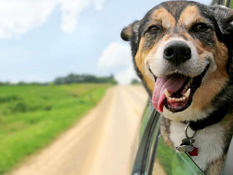 O cão amarrado ao poste (Foto: Adriana Oliveira)