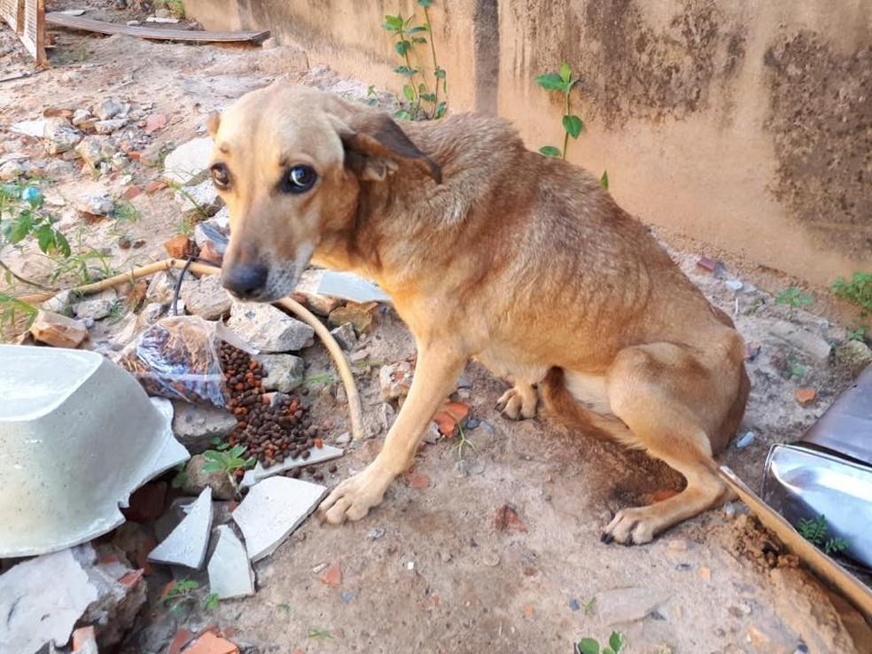 Cão abandonado (Reprodução da web)