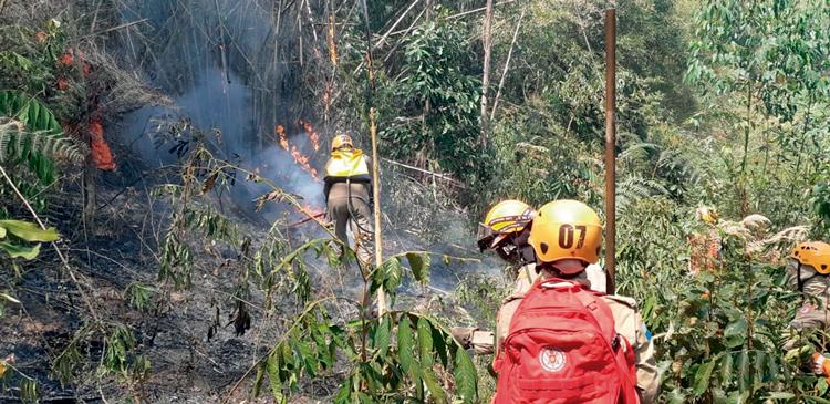 Bombeiros do 6º GBM combatem fogo na mata (Fotos: 6º GBM)