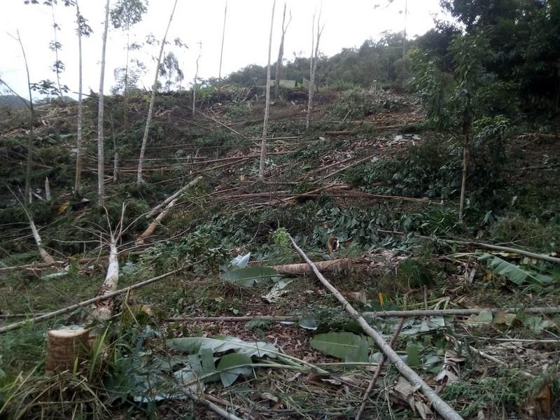 A área desmatada (Foto: Upam)