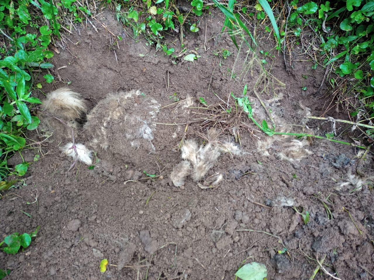 Cão enterrado em cova rasa no sítio em Cardinot (Fotos de leitores)