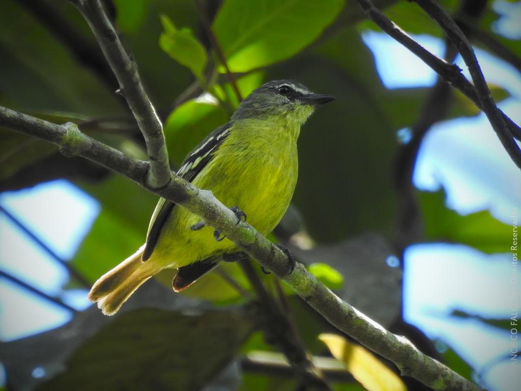 Foto: Falcon Birdwatching
