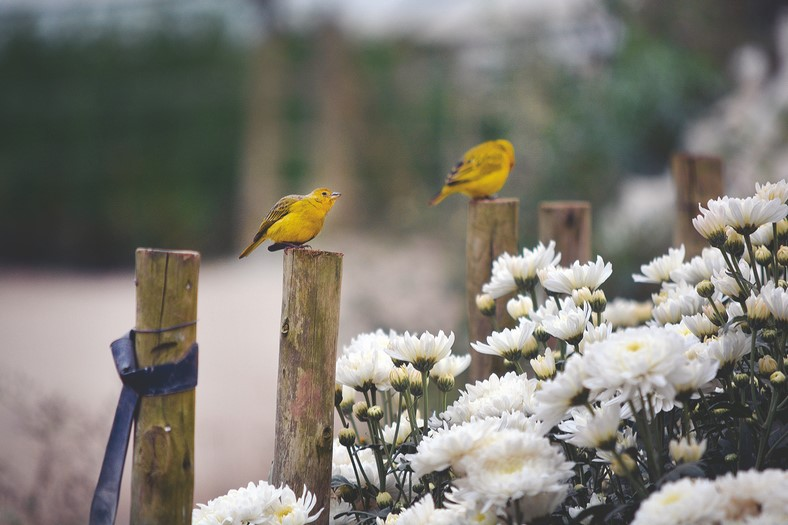Até os pássaros pousam para admirar a beleza das flores em Friburgo (Foto: Henrique Pinheiro)