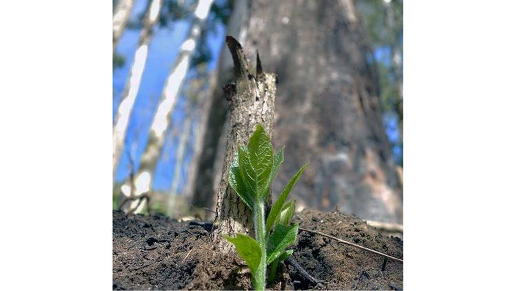 Friburgo promove atividades de conscientização e preservação da natureza