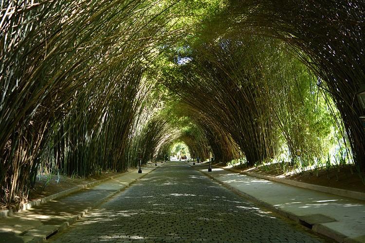 O bambuzal do Country encanta turistas (Arquivo AVS/ Henrique Pinheiro)