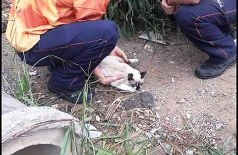O gato sendo resgatado por funcionários após a suposta agressão: