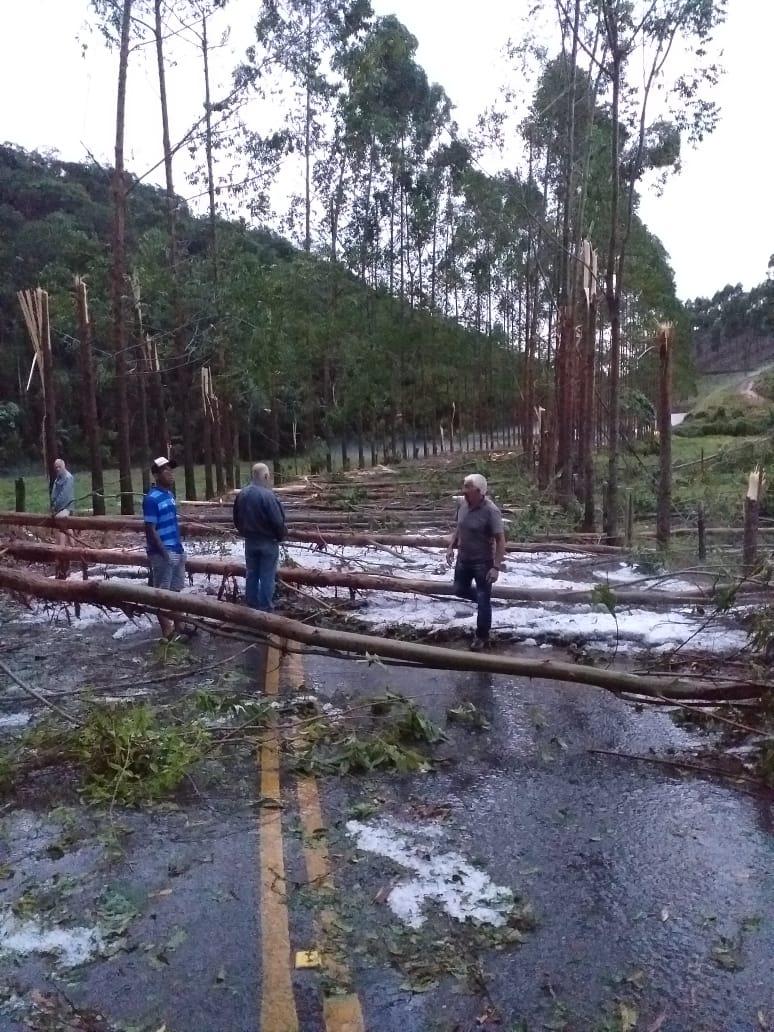 Granizo e eucaliptos na estrada entre Carmo e Duas Barras (Fotos de leitores)