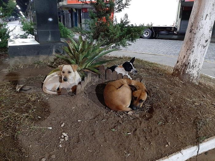 Cães cavam buracos na terra para se esquentarem