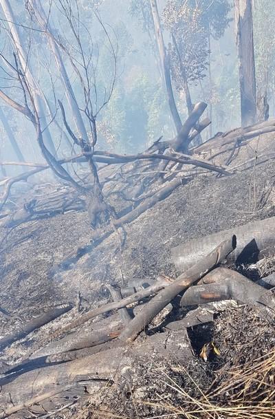 Incêndios são comuns em Friburgo nesta época seca do ano (Arquivo AVS)
