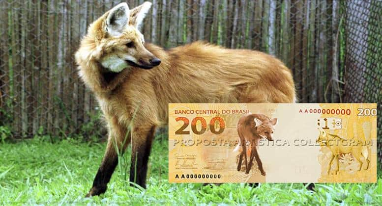 O lobo-guará: terceiro animal em extinção mais votado em 2001