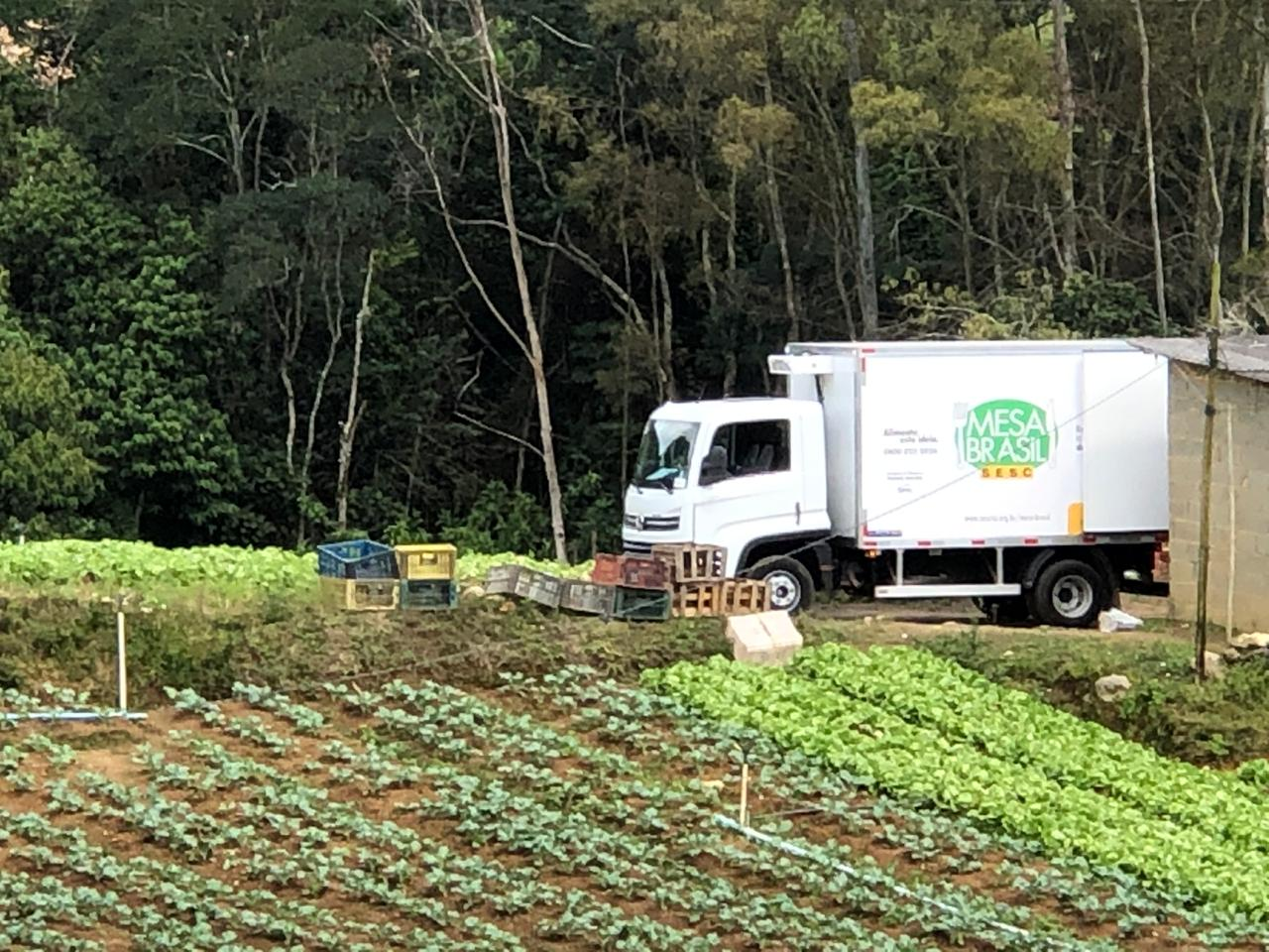 A colheita das hortaliças (Divulgação)
