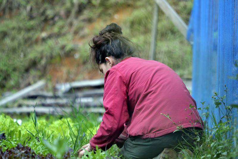 Hortas do Sítio Cultivar (Foto: Henrique Pinheiro)
