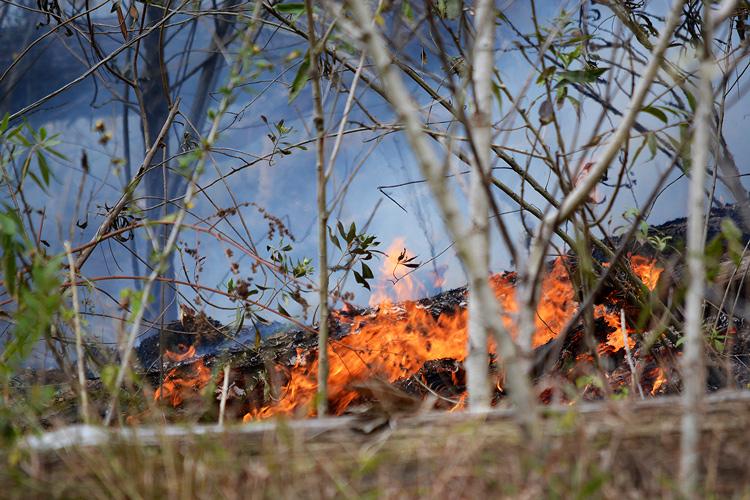 Fogo em mata é comum nesta época seca do ano (Fotos: Henrique Pinheiro)