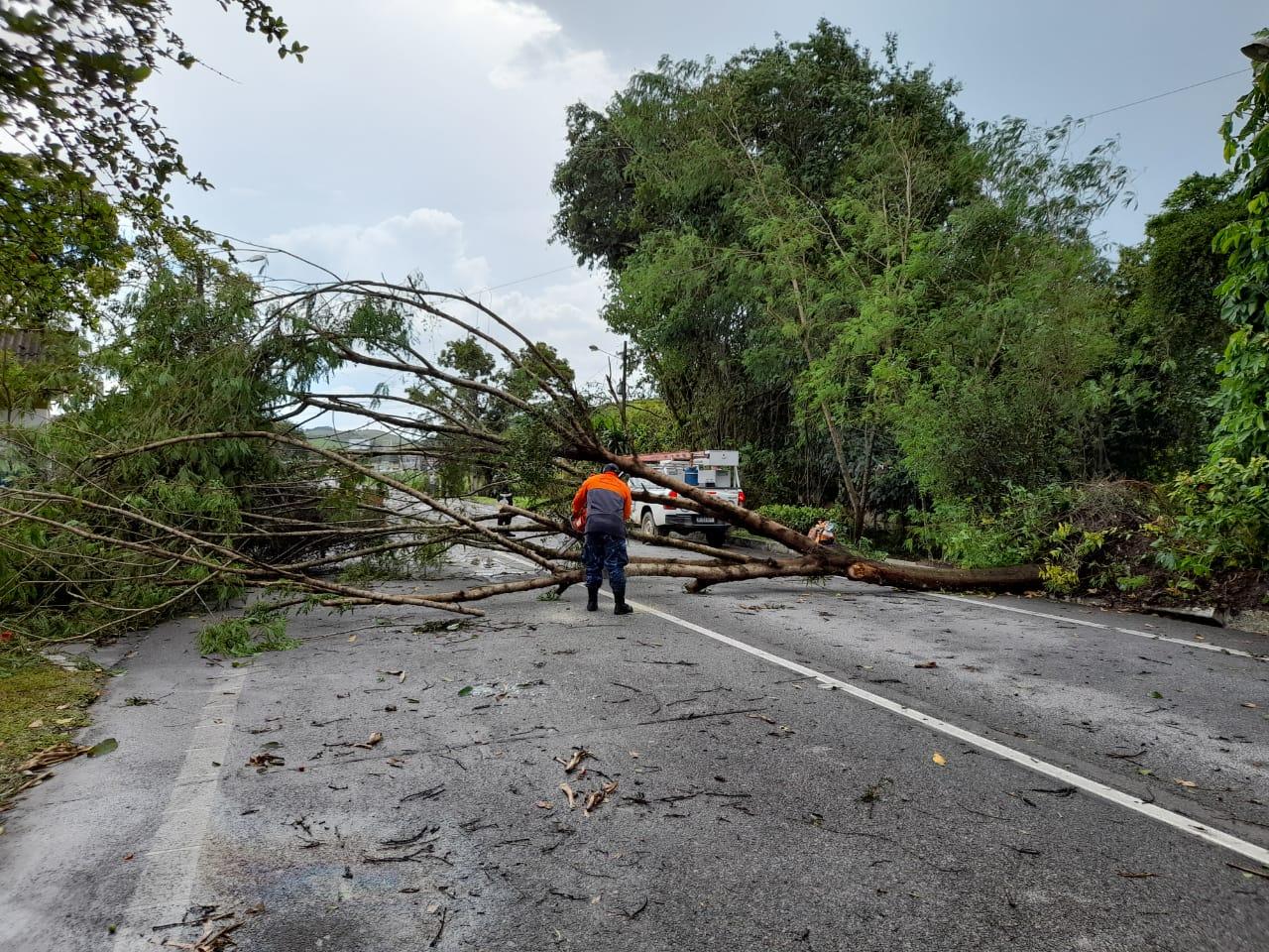 A árvore atravessada na estrada (Foto: Rota 116)