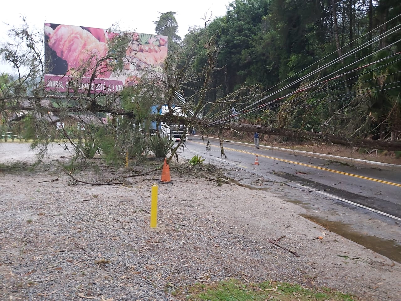 A árvores atravessada na rodovia (Fotos de leitores)