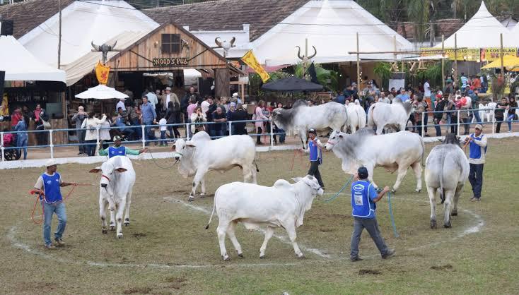 Exposição de gado na feira de Cordeiro (Divulgação)