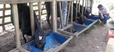 Sumidouro ganha projeto de melhoria da qualidade do leite