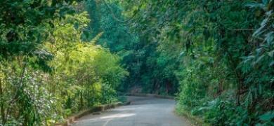 Floresta da Tijuca (Fotos: Pixabay)